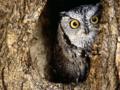 Not an owl