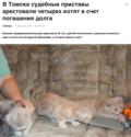 kittens arrested