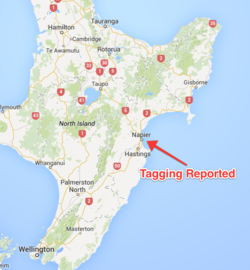 Tagging Reported