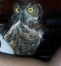 chillin with a owl