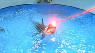 laser shark!