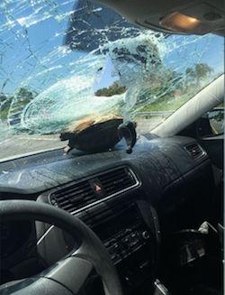 turtle on dashboard