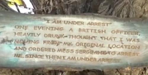 The tree's testimony (image: screenshot from Samaa-TV report)