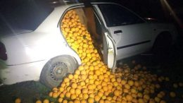 oranges spilling out of a car